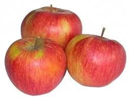 яблоки Чемпион КБ