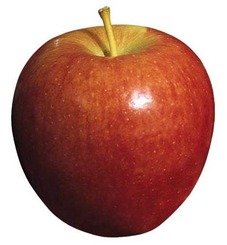 яблоко бребурн